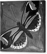 Lord Of The Butterfly Acrylic Print