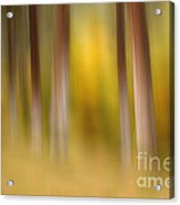 Lost In Autumn Acrylic Print by Beve Brown-Clark Photography