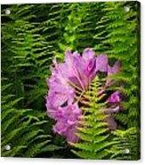 Lost In The Fern Garden Acrylic Print