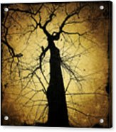Lost In The Forest I Broke Off A Dark Twig And Lifted Its Whisper To My Thirsty Lips Acrylic Print
