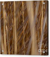 Lost In The Reed Acrylic Print