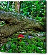 Lost In The Woods Acrylic Print