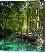 Lost Lagoon On The Yucatan Coast Acrylic Print by Mark E Tisdale