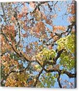Lost Maples Acrylic Print