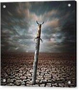 Lost Sword Acrylic Print