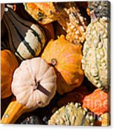 Lots Of Little Gourds Acrylic Print