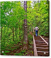 Lots Of Steps On La Chute Trail In Forillon Np-qc Acrylic Print