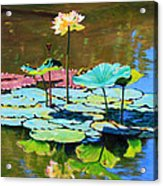 Lotus Above the Lily Pads Acrylic Print