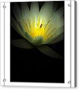 Lotus And Bee Poster Acrylic Print