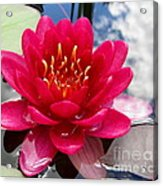 Lotus Cloud Acrylic Print