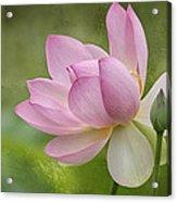 Lotus Dance Acrylic Print