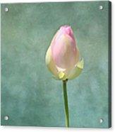 Lotus Flower Bud Acrylic Print