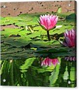 Lotus Flower Reflections Acrylic Print