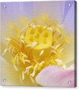 Lotus In Side Acrylic Print by Lila Shravani