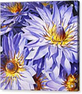 Lotus Light - Hawaiian Tropical Floral Acrylic Print