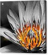 Lotus On Fire Acrylic Print