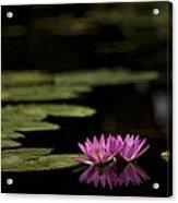 Lotus Reflections Acrylic Print