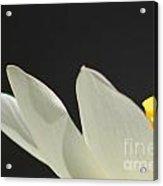 Lotus Silent Intimate Acrylic Print