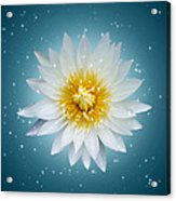 Lotus With Glitter Background  Acrylic Print