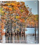 Louisiana Autumn Acrylic Print
