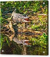 Louisiana Bayou 2 - Paint Acrylic Print