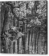 Louisiana Bayou - Bw Acrylic Print