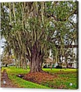 Louisiana Country Acrylic Print