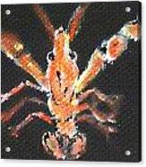 Louisiana Crawfish Acrylic Print by Katie Spicuzza