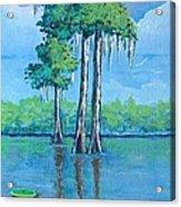 Louisiana Cypress Acrylic Print
