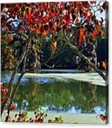 Louisiana Fall Acrylic Print