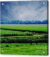 Louisiana Greenway Acrylic Print