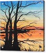 Louisiana Lacassine Nwr Treescape Acrylic Print