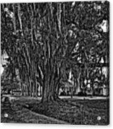 Louisiana Moon Rising Monochrome  Acrylic Print