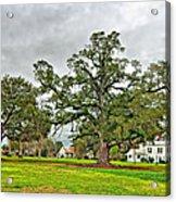 Louisiana Winter 2 Acrylic Print