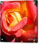 Love And Peace Rose Acrylic Print