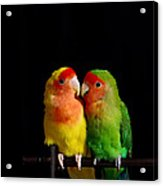 Love Birds At First Sight Acrylic Print