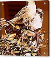 Love Birds II Acrylic Print