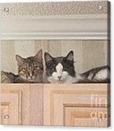 Love Cats Acrylic Print