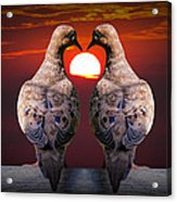 Love Dove Birds At Sunset Acrylic Print