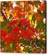 Love Fall Acrylic Print
