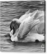 Love In Slow Motion Acrylic Print