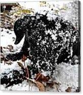 Love Lab Snow 4 Acrylic Print