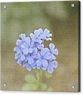 Love Letter Acrylic Print