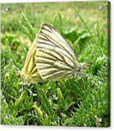 Love Acrylic Print by Lucy D