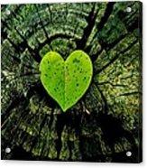 Love Nature  Acrylic Print