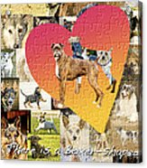 Love Of Boxers Acrylic Print by Judy Wood