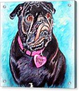 Love Pug Acrylic Print