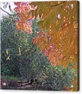 Lovely Autumn Colors Acrylic Print