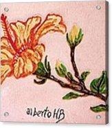 Lovely Hibiscus Acrylic Print