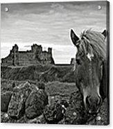 Lovely Horse And Tantallon Castle Acrylic Print